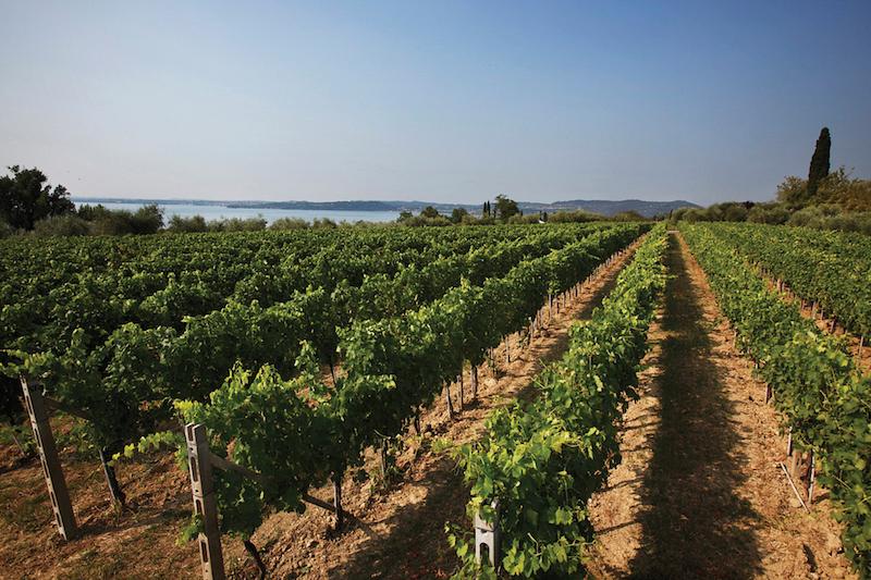 ©Lugana D.O.C. Wine Consortium